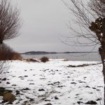 Winter am Bodden