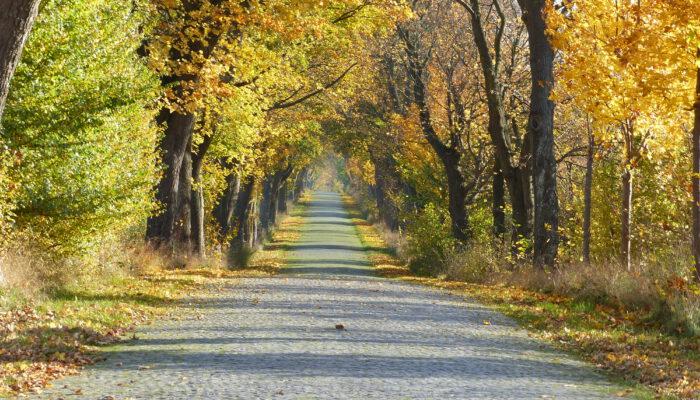 Der Herbst färbt auch die Alleen kunterbunt ein.